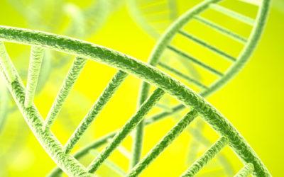 Vertiefungstag für Genetic-Healing-Coaches in Luxemburg